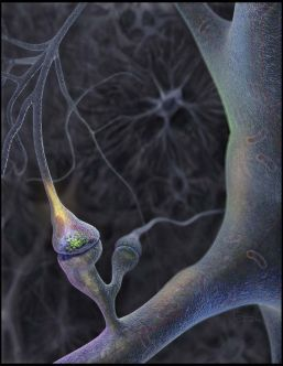This image shows a synapse - a junction between two nerve cells